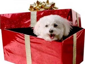Claves para elegir un buen regalo para el niño