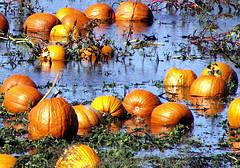 Happy Halloween From Sunny New Jersey!