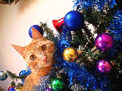 Mitzu y el espiritu navideño